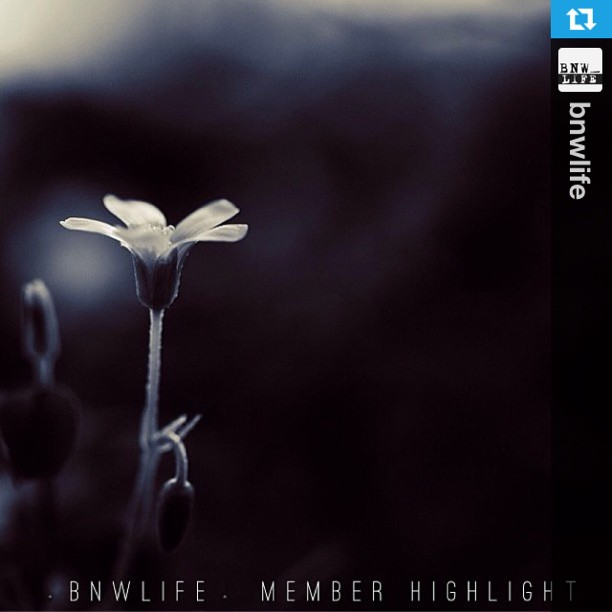 BNWLIFE Member's Highlight FEATURE