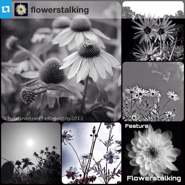 FlowerStalking FEATUR