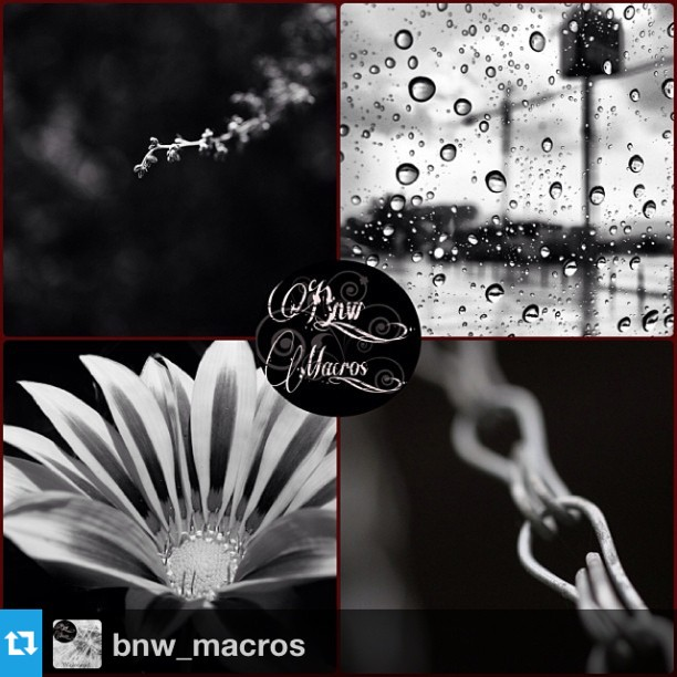 BnW_Macros ARTISTS TO WATCH
