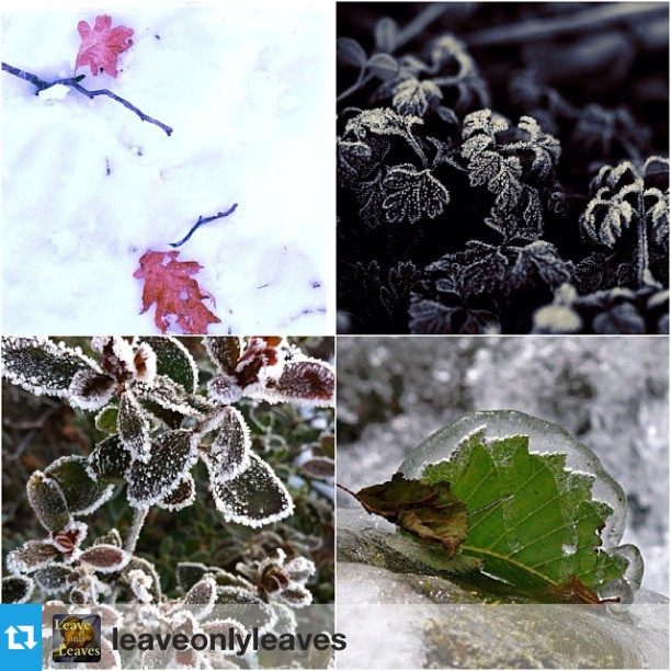 leaveonlyleaves CHILLY TUESDAY WINNERS