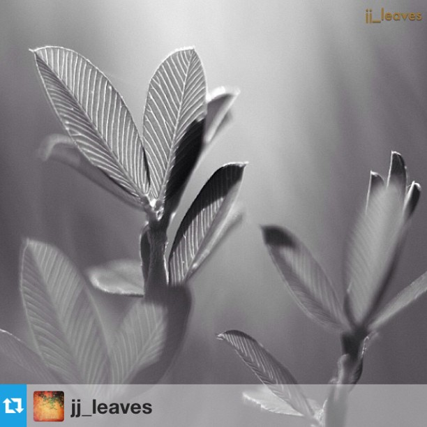 jj_leaves FEATUR!