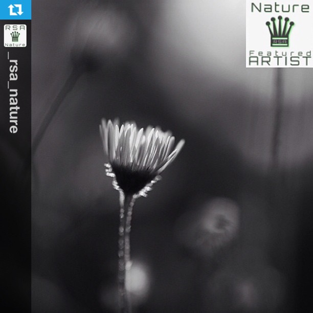 RSA_Nature Featured Artist