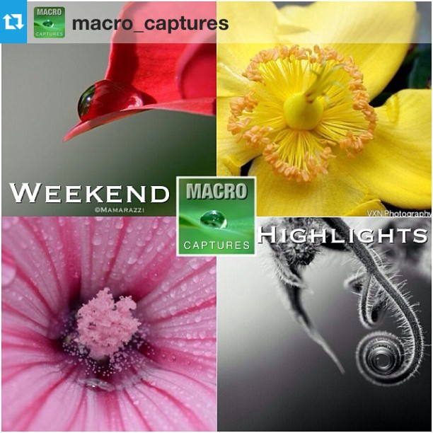 Macro_Captures WEEKEND HIGHLIGHTS
