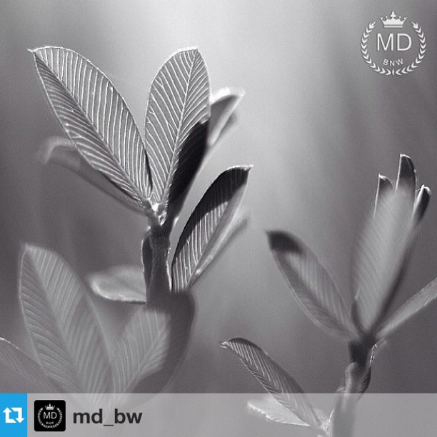 MD_BW Featured Artist!