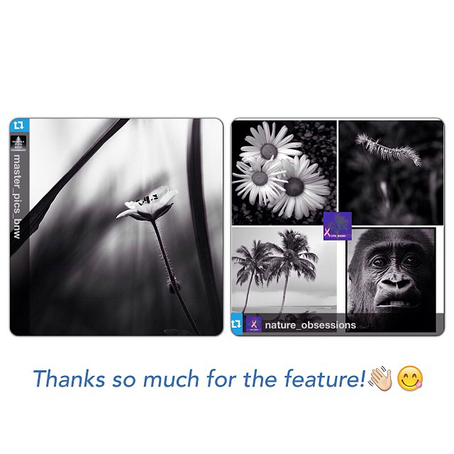 Master_Pics_Bnw & Nature_Obsessions FEATURE!