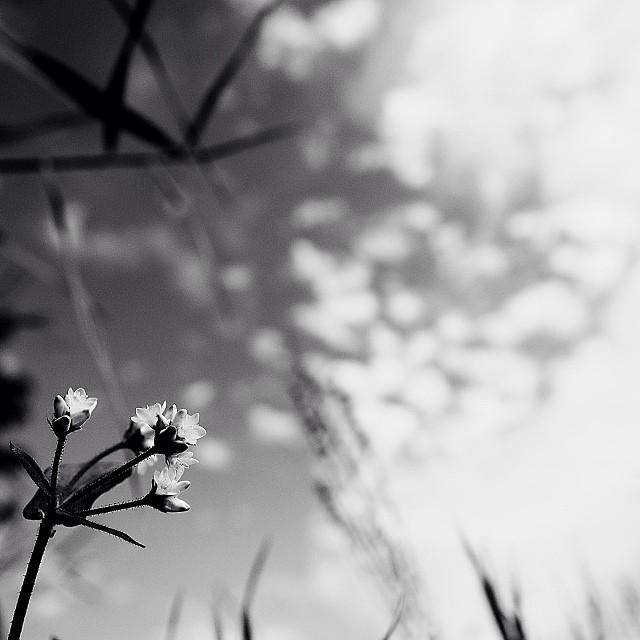 Autumnal sky