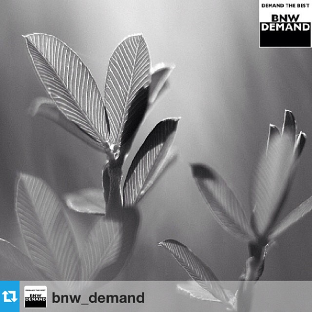 BNW_DEMAND featured artists today!