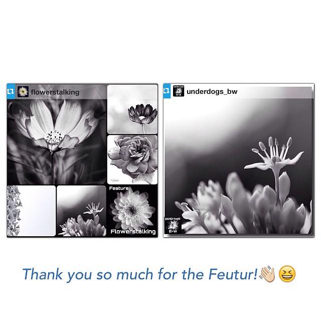 Flowerstalking & Underdogs_BW FEATUR!