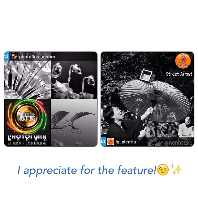 PHOTOFLAIR_MACRO and IG_ALEGRIA FEATURE!