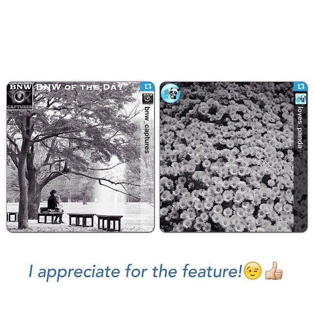 BNW_CAPTURE and LOVES_PANDA FEATURE!