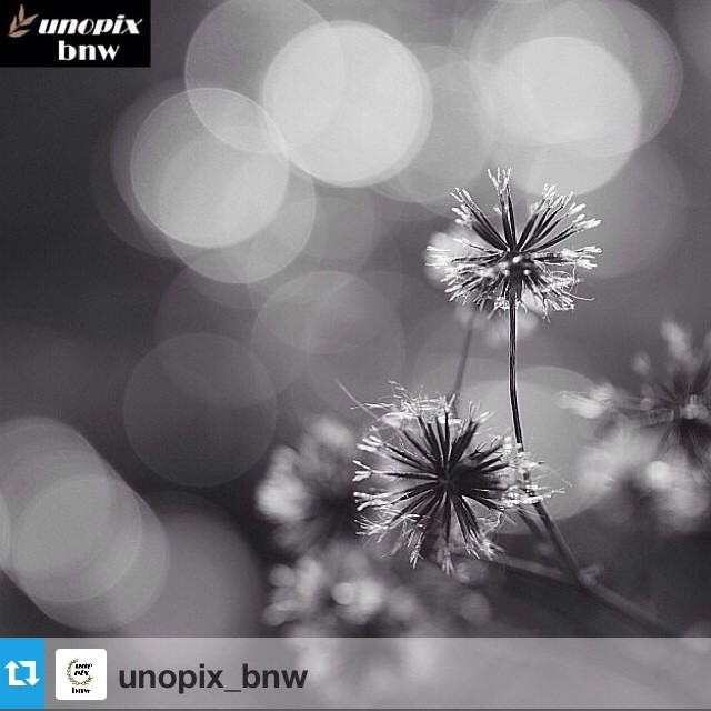 Unopix_Bnw FEATURE!