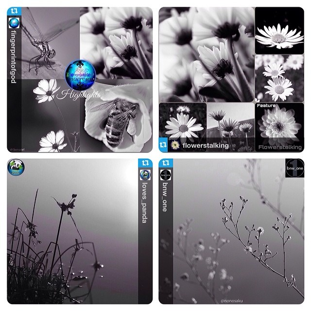 FingerprintofGod FlowerStalking Loves_Panda Bnw_One FEATURE!