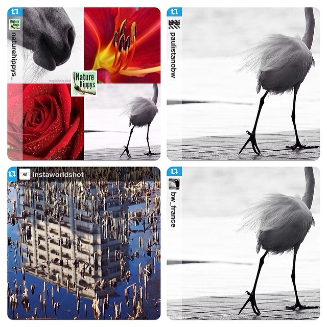 NatureHippys_ PaulistanoBW InstaWorldShot Bw_France FEATURES!
