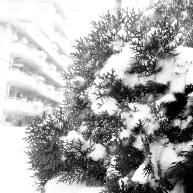Snow has come