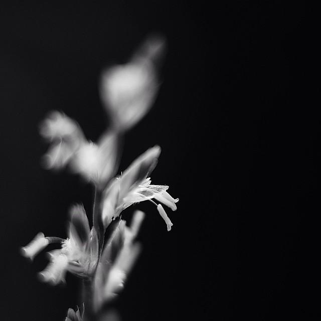 Spirit of weed