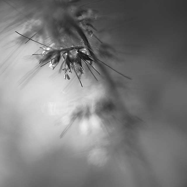 A hidden fairy