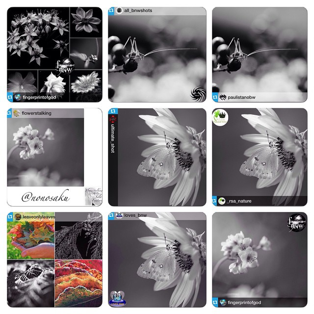 Huge thanks for the FEATURES! I really appreciate for the featuring of my photos! It's great honor! @fingerprintofgod #fpog_bnw @all_bnwshots #all_bnwshots @paulistanobw #paulistanobw @flowerstalking #FlowerStalking_BW @ultimate_shot #ultimate_shot @_rsa_nature #rsa_nature_bnw@leaveonlyleaves #leaveonlyleaves @loves_bnw #loves_bnw Hey guys! Please check out Amazing feed!! *★no need likes and comments, Thank you everyone as always!!