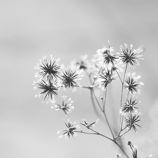 Gentle thorn