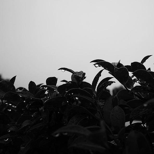 False rain