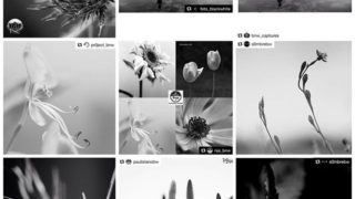 Huge thanks for the FEATURES!I really appreciate for the featuring of my photos! It's great honor!@tgif_bnw #tgif_bnw @foto_blackwhite #foto_blackwhite @bnw_captures #bnw_captures@pr0ject_bnw #pr0ject_bnw @rsa_bnw #rsa_bnw (BL) @s0mbrebw #sombrebw @nature_brilliance #nature_brilliance @paulistanobw #paulistanobw @s0mbrebw #sombrebw Hey guys! Please check out Amazing feed!!★no need likes and comments, Thank you friends for your support!