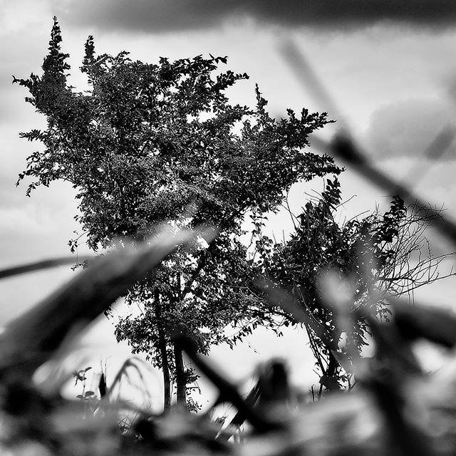 Lost grassland