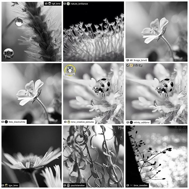 Huge thanks for the FEATURES!I really appreciate for the featuring of my photos! It's great honor!@tgif_bnw #tgif_bnw @nature_brilliance #nature_brilliance @9Vaga_Bnw9 #9Vaga_Bnw9 @foto_blackwhite #foto_blackwhite @bnw_creative_pictures #bnw_creative_pictures @infinity_editbnw #infinity_editbnw @ig_bnw #ig_bnw@paulistanobw #paulistanobw @bnw_sweden #bnw_sweden Hey guys! Please check out Amazing feed!!★no need likes and comments, Thank you friends for your support!
