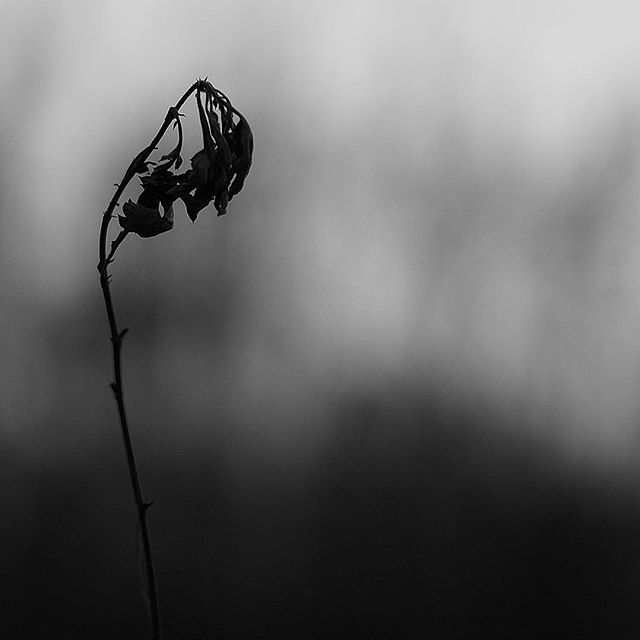Abundant silence