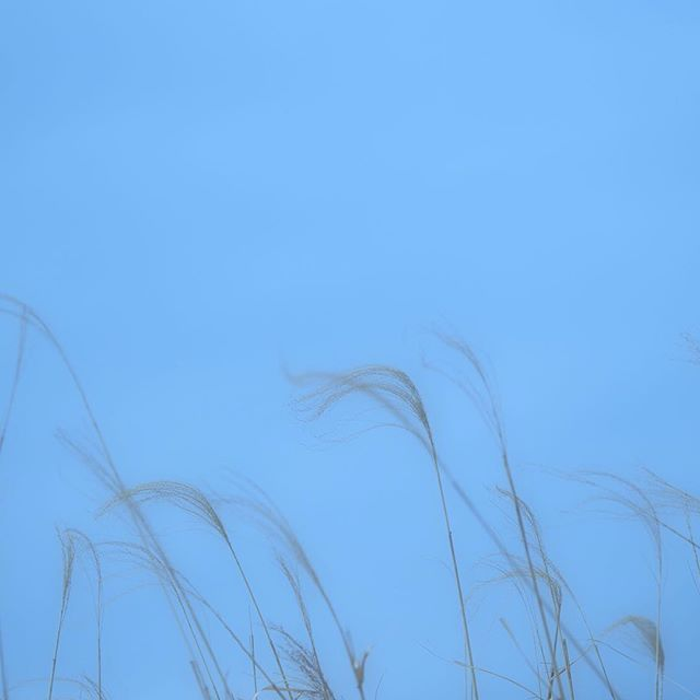 Memories of Blue