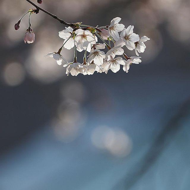 Spring color 3