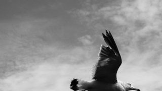 Take a nice wind…..#worldcaptures #royalsnappingartists#myighub #Bnw_captures #bnw_fabulous #all_bnwshots #sombrebw #friendsinbnw #Rsa_bnw #Rustlord_unity #bnw_lombardia_member #modefinedbw #insta_pick_bw  #pr0ject_bnw #trb_bnw #tgif_bnw #foto_blackwhite #dof_addicts #great_bnw_nature #bnw_sweden #igs_bnw #Thehub_bnw #fingerprintofgod #naturehippys_ #Nature_brilliance_bnw #GrammerCollective #bwgrammer #bewitched_flowers