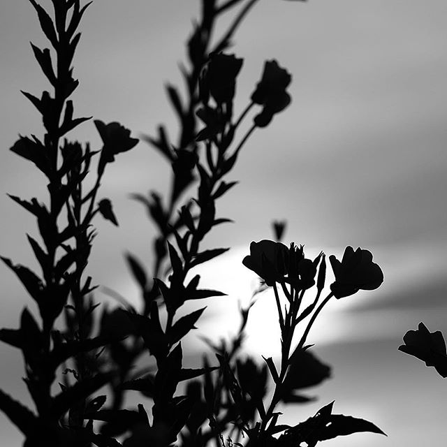 She was waiting for the morning.....#worldcaptures #royalsnappingartists#myighub #Bnw_captures #bnw_fabulous #all_bnwshots #sombrebw #friendsinbnw #Rsa_bnw #Rustlord_unity #bnw_lombardia_member #modefinedbw #insta_pick_bw  #pr0ject_bnw #trb_bnw #tgif_bnw #foto_blackwhite #dof_addicts #great_bnw_nature #bnw_sweden #igs_bnw #Thehub_bnw #fingerprintofgod #naturehippys_ #Nature_brilliance_bnw #GrammerCollective #bwgrammer #bewitched_flowers