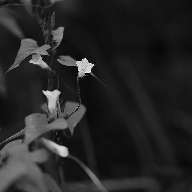 A gift from shadow.....#worldcaptures #royalsnappingartists#myighub #Bnw_captures #bnw_fabulous #all_bnwshots #sombrebw #friendsinbnw #Rsa_bnw #Rustlord_unity #bnw_lombardia_member #modefinedbw #insta_pick_bw  #pr0ject_bnw #trb_bnw #tgif_bnw #foto_blackwhite #dof_addicts #great_bnw_nature #bnw_sweden #igs_bnw #Thehub_bnw #fingerprintofgod #naturehippys_ #Nature_brilliance_bnw #GrammerCollective #bwgrammer #bewitched_flowers