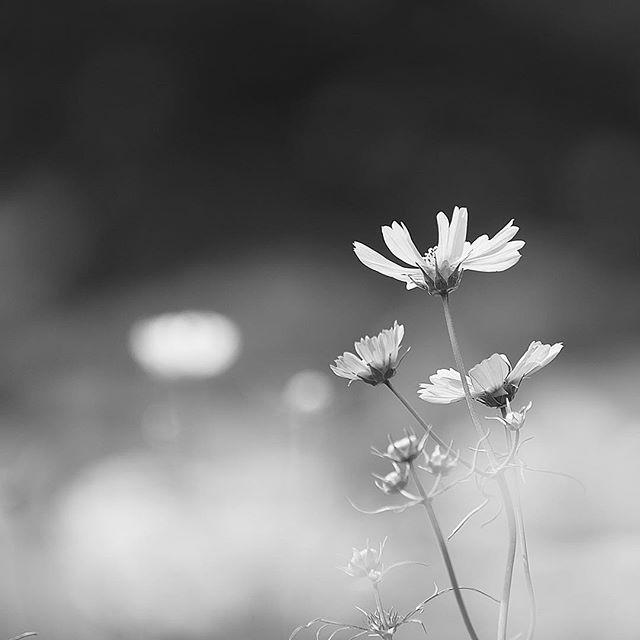 I want stillness.....#worldcaptures #royalsnappingartists#myighub #Bnw_captures #bnw_fabulous #all_bnwshots #sombrebw #friendsinbnw #Rsa_bnw #Rustlord_unity #bnw_lombardia_member #modefinedbw #insta_pick_bw  #pr0ject_bnw #trb_bnw #tgif_bnw #foto_blackwhite #dof_addicts #great_bnw_nature #bnw_sweden #igs_bnw #Thehub_bnw #fingerprintofgod #naturehippys_ #Nature_brilliance_bnw #GrammerCollective #bwgrammer #bewitched_flowers