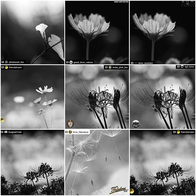 Thanks a million for the FEATURES!I really appreciate for the featuring of my photos! It's great honor!_top@photowall_bw #photowall_bw@great_bnw_nature #great_bnw_nature @bnw_sweden #bnw_sweden _middle@friendsinzen #friendsinzen @insta_pick_bw #insta_pick_bw @tgif_bnw #tgif_bnw _bottom@bwgrammer #bwgrammer @bnw_fabulous  #bnw_fabulous @friendsinzen #friendsinzen ___Hey guys! Please check out Amazing feed!!★no need likes and comments, Thank you friends for your support!