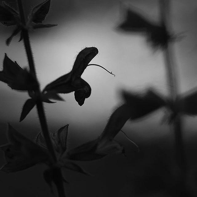 Shadow play.....#worldcaptures #royalsnappingartists#myighub #Bnw_captures #bnw_fabulous #all_bnwshots #sombrebw #friendsinbnw #Rsa_bnw #Rustlord_unity #bnw_lombardia_member #modefinedbw #insta_pick_bw  #pr0ject_bnw #trb_bnw #tgif_bnw #foto_blackwhite #dof_addicts #great_bnw_nature #bnw_sweden #igs_bnw #Thehub_bnw #fingerprintofgod #naturehippys_ #Nature_brilliance_bnw #GrammerCollective #bwgrammer #bewitched_flowers