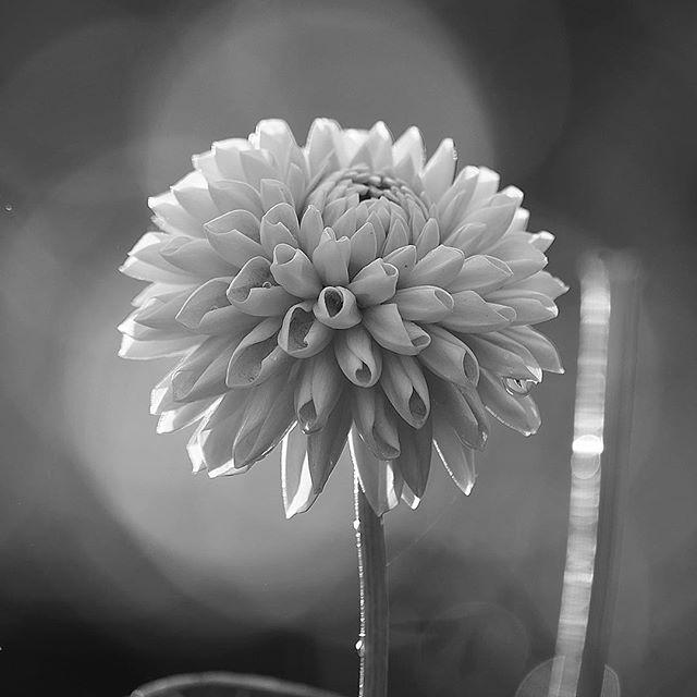 Cocoon of the joy.....#worldcaptures #royalsnappingartists#myighub #Bnw_captures #bnw_fabulous #all_bnwshots #sombrebw #friendsinbnw #Rsa_bnw #Rustlord_unity #bnw_lombardia_member #modefinedbw #insta_pick_bw  #pr0ject_bnw #trb_bnw #tgif_bnw #foto_blackwhite #dof_addicts #great_bnw_nature #bnw_sweden #igs_bnw #Thehub_bnw #fingerprintofgod #naturehippys_ #Nature_brilliance_bnw #GrammerCollective #bwgrammer #bewitched_flowers