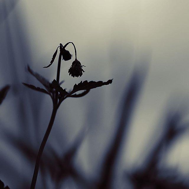 Depressed morning.....#worldcaptures #royalsnappingartists#myighub #Bnw_captures #bnw_fabulous #all_bnwshots #sombrebw #friendsinbnw #Rsa_bnw #Rustlord_unity #bnw_lombardia_member #modefinedbw #insta_pick_bw  #pr0ject_bnw #trb_bnw #tgif_bnw #foto_blackwhite #dof_addicts #great_bnw_nature #bnw_sweden #igs_bnw #Thehub_bnw #fingerprintofgod #naturehippys_ #Nature_brilliance_bnw #GrammerCollective #bwgrammer #bewitched_flowers
