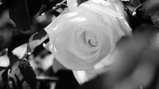 Can't hide it…..#worldcaptures #royalsnappingartists#myighub #Bnw_captures #bnw_fabulous #all_bnwshots #sombrebw #friendsinbnw #Rsa_bnw #Rustlord_unity #bnw_lombardia_member #modefinedbw #insta_pick_bw  #pr0ject_bnw #trb_bnw #tgif_bnw #foto_blackwhite #dof_addicts #great_bnw_nature #bnw_sweden #igs_bnw #Thehub_bnw #fingerprintofgod #naturehippys_ #Nature_brilliance_bnw #GrammerCollective #bwgrammer #bewitched_flowers