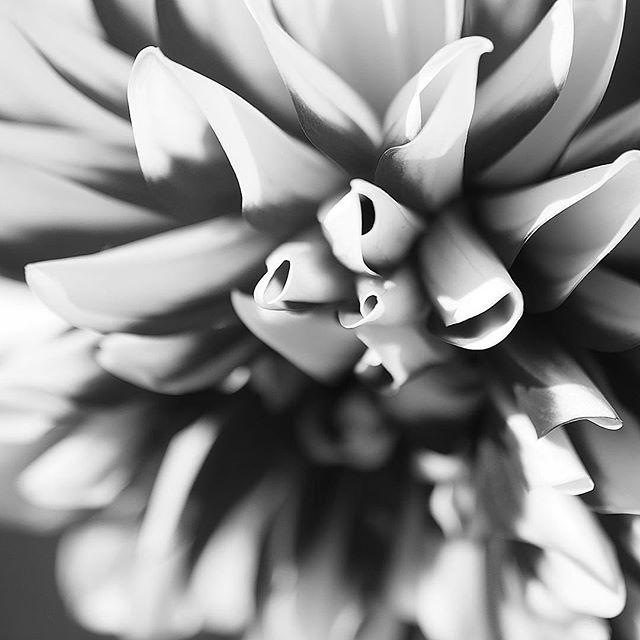 imagination flower.....#worldcaptures #royalsnappingartists#myighub #Bnw_captures #bnw_fabulous #all_bnwshots #sombrebw #friendsinbnw #Rsa_bnw #Rustlord_unity #bnw_lombardia_member #modefinedbw #insta_pick_bw  #pr0ject_bnw #trb_bnw #tgif_bnw #foto_blackwhite #dof_addicts #great_bnw_nature #bnw_sweden #igs_bnw #Thehub_bnw #fingerprintofgod #naturehippys_ #Nature_brilliance_bnw #GrammerCollective #bwgrammer #bewitched_flowers