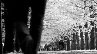To walk away…..#worldcaptures #royalsnappingartists#myighub #Bnw_captures #bnw_fabulous #all_bnwshots #sombrebw #friendsinbnw #Rsa_bnw #Rustlord_unity #bnw_lombardia_member #modefinedbw #insta_pick_bw  #pr0ject_bnw #trb_bnw #tgif_bnw #foto_blackwhite #dof_addicts #great_bnw_nature #bnw_sweden #igs_bnw #Thehub_bnw #fingerprintofgod #naturehippys_ #Nature_brilliance_bnw #GrammerCollective #bwgrammer #bewitched_flowers