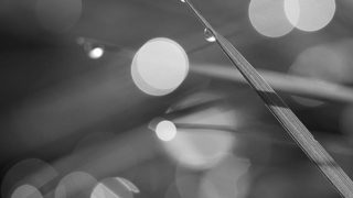 Rounded than sharpness…..#worldcaptures #royalsnappingartists#myighub #Bnw_captures #bnw_fabulous #all_bnwshots #sombrebw #friendsinbnw #Rsa_bnw #Rustlord_unity #bnw_lombardia_member #modefinedbw #insta_pick_bw  #pr0ject_bnw #trb_bnw #tgif_bnw #foto_blackwhite #dof_addicts #great_bnw_nature #bnw_sweden #igs_bnw #Thehub_bnw #fingerprintofgod #naturehippys_ #Nature_brilliance_bnw #GrammerCollective #bwgrammer #bewitched_flowers