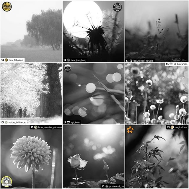 Huge Thanks for the FEATURES!I really appreciate for the featuring of my photos! It's great honor!_top@bnw_fabulous  #bnw_fabulous @bnw_jrengjreng #bnw_jrengjreng @bewitched_flowers #bewitched_flowers _middle@nature_brilliance #nature_brilliance @tgif_bnw #tgif_bnw @all_bnwshots #all_bnwshots _bottom@bnw_creative_pictures #bnw_creative_pictures @photowall_bw #photowall_bw @magicalbnw #magicalbnw ___Hey guys! Please check out Amazing feed!!★no need likes and comments, Thank you friends for your support!