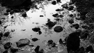 Autumn in Ganymede…..#worldcaptures #royalsnappingartists#myighub #Bnw_captures #bnw_fabulous #all_bnwshots #sombrebw #friendsinbnw #Rsa_bnw #Rustlord_unity #bnw_lombardia_member #modefinedbw #insta_pick_bw  #pr0ject_bnw #trb_bnw #tgif_bnw #foto_blackwhite #dof_addicts #great_bnw_nature #bnw_sweden #igs_bnw #Thehub_bnw #fingerprintofgod #naturehippys_ #Nature_brilliance_bnw #GrammerCollective #bwgrammer #bewitched_flowers