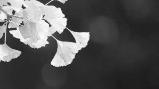 Leaves enjoy light…..#worldcaptures #royalsnappingartists#myighub #Bnw_captures #bnw_fabulous #all_bnwshots #sombrebw #friendsinbnw #Rsa_bnw #Rustlord_unity #bnw_lombardia_member #modefinedbw #insta_pick_bw  #pr0ject_bnw #trb_bnw #tgif_bnw #foto_blackwhite #dof_addicts #great_bnw_nature #bnw_sweden #igs_bnw #Thehub_bnw #fingerprintofgod #naturehippys_ #Nature_brilliance_bnw #GrammerCollective #bwgrammer #bewitched_flowers