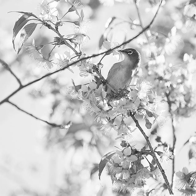 Spring of the late fall.....#worldcaptures #royalsnappingartists#myighub #Bnw_captures #bnw_fabulous #all_bnwshots #sombrebw #friendsinbnw #Rsa_bnw #Rustlord_unity #bnw_lombardia_member #modefinedbw #insta_pick_bw  #pr0ject_bnw #trb_bnw #tgif_bnw #foto_blackwhite #dof_addicts #great_bnw_nature #bnw_sweden #igs_bnw #Thehub_bnw #fingerprintofgod #naturehippys_ #Nature_brilliance_bnw #GrammerCollective #bwgrammer #bewitched_flowers