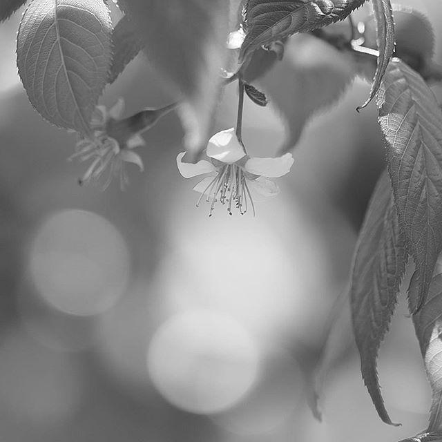 still slightly warm.....#worldcaptures #royalsnappingartists#myighub #Bnw_captures #bnw_fabulous #all_bnwshots #sombrebw #friendsinbnw #Rsa_bnw #Rustlord_unity #bnw_lombardia_member #modefinedbw #insta_pick_bw  #pr0ject_bnw #trb_bnw #tgif_bnw #foto_blackwhite #dof_addicts #great_bnw_nature #bnw_sweden #igs_bnw #Thehub_bnw #fingerprintofgod #naturehippys_ #Nature_brilliance_bnw #GrammerCollective #bwgrammer #bewitched_flowers