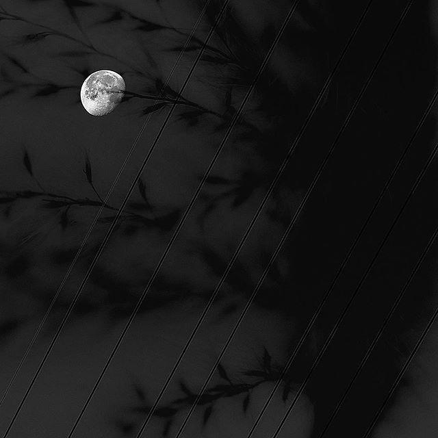 a fictitious moon.....#worldcaptures #royalsnappingartists#myighub #Bnw_captures #bnw_fabulous #all_bnwshots #sombrebw #friendsinbnw #Rsa_bnw #Rustlord_unity #bnw_lombardia_member #modefinedbw #insta_pick_bw  #pr0ject_bnw #trb_bnw #tgif_bnw #foto_blackwhite #dof_addicts #great_bnw_nature #bnw_sweden #igs_bnw #Thehub_bnw #fingerprintofgod #naturehippys_ #Nature_brilliance_bnw #GrammerCollective #bwgrammer #bewitched_flowers