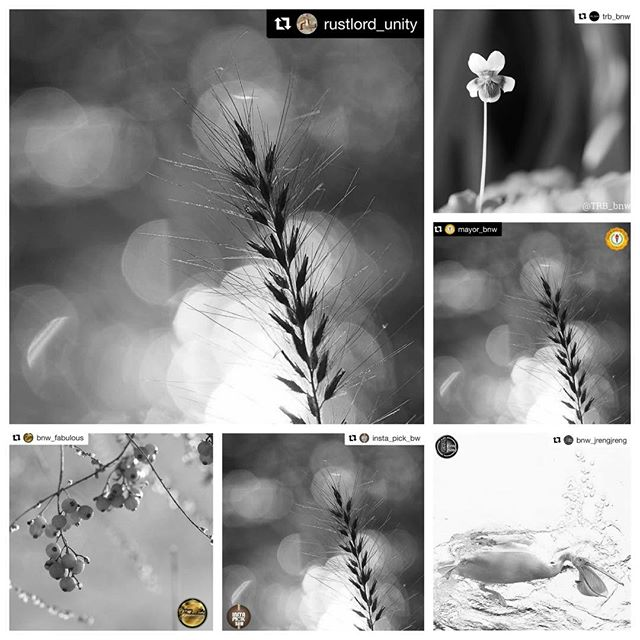Huge Thanks for the FEATURES!I really appreciate for the featuring of my photos! It's great honor!@bnw_jrengjreng #bnw_jrengjreng @trb_bnw #trb_bnw @mayor_bnw #mayor_bnw @rustlord_unity #rustlord_unity @insta_pick_bw #insta_pick_bw @bnw_fabulous  #bnw_fabulous ___Hey guys! Please check out Amazing feed!!★no need likes and comments, Thank you friends for your support!