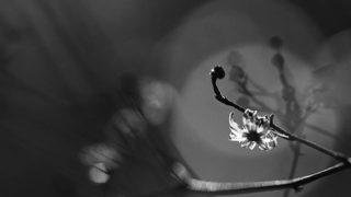 a phantasmagoria of twig…..#worldcaptures #royalsnappingartists#myighub #Bnw_captures #bnw_fabulous #all_bnwshots #sombrebw #friendsinbnw #Rsa_bnw #Rustlord_unity #bnw_lombardia_member #modefinedbw #insta_pick_bw  #pr0ject_bnw #trb_bnw #tgif_bnw #foto_blackwhite #dof_addicts #great_bnw_nature #bnw_sweden #igs_bnw #Thehub_bnw #fingerprintofgod #naturehippys_ #Nature_brilliance_bnw #GrammerCollective #bwgrammer #bewitched_flowers
