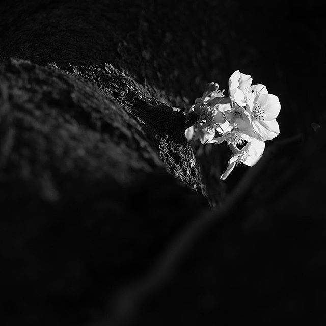 a fleeting ground.....#worldcaptures #royalsnappingartists#myighub #Bnw_captures #bnw_fabulous #all_bnwshots #sombrebw #friendsinbnw #Rsa_bnw #Rustlord_unity #bnw_lombardia_member #modefinedbw #insta_pick_bw  #pr0ject_bnw #trb_bnw #tgif_bnw #foto_blackwhite #dof_addicts #great_bnw_nature #bnw_sweden #igs_bnw #Thehub_bnw #fingerprintofgod #naturehippys_ #Nature_brilliance_bnw #GrammerCollective #bwgrammer #bewitched_flowers